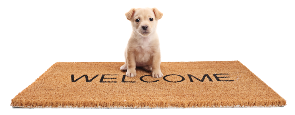 Dog on rectangle welcome mat