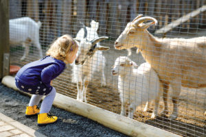 Child with goats at zoo