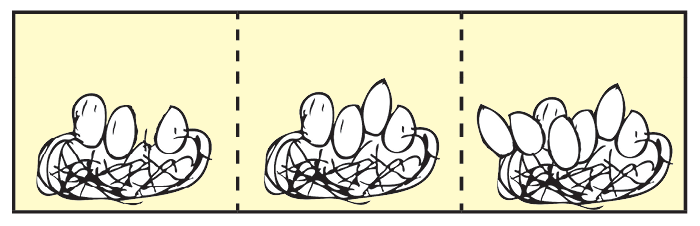 Illustration of eggs in 3 sections