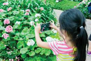 Child photographing flowers